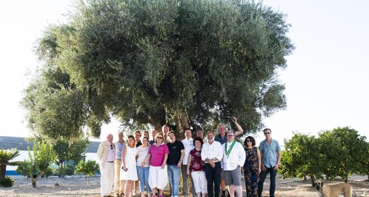 Cueillir des olive chez le partenaire Dolce Vale de Arca à Alentejo Portugal 2017